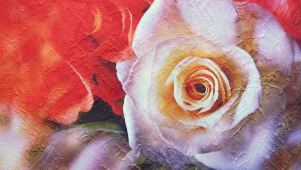 rosebrushes
