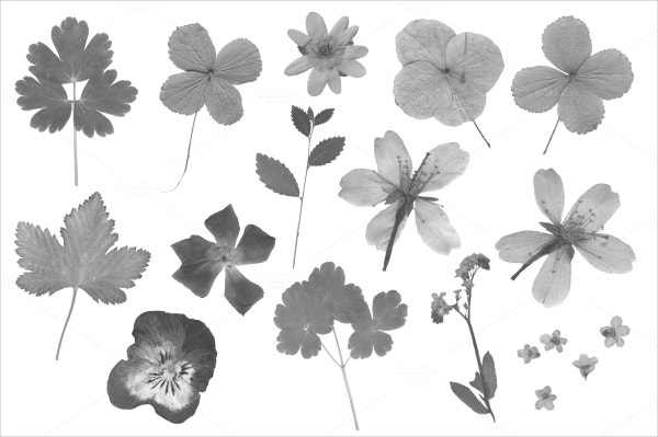 pressed flowers petal brushes