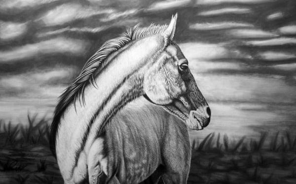 horse looking back pencil fine art