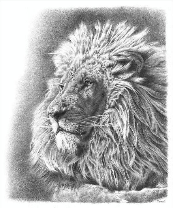 Lion Drawing Pencil Fine Art Design