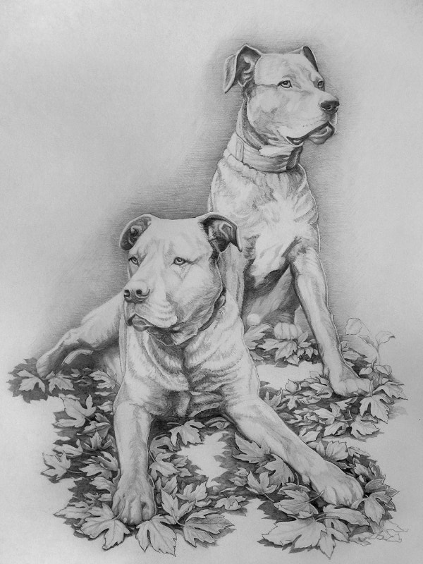 Pet Dogs Portrait Pencil Fine Art Design