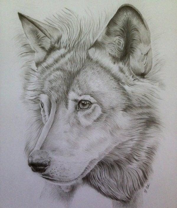 wolf pencil portrait fine art design