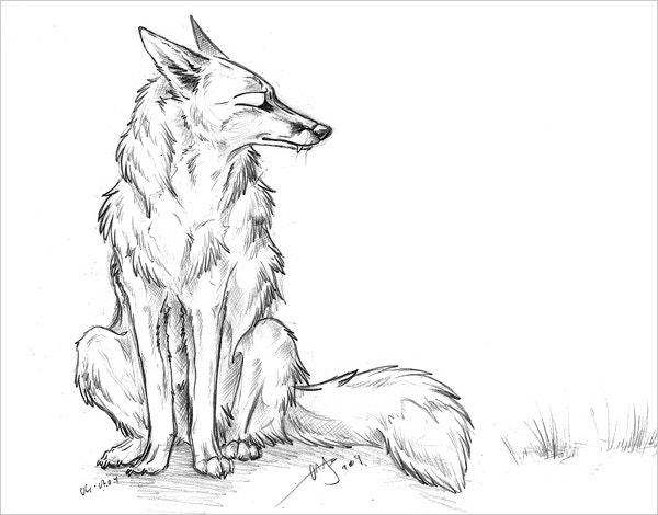Ugly Fox pencil Fine Art Design