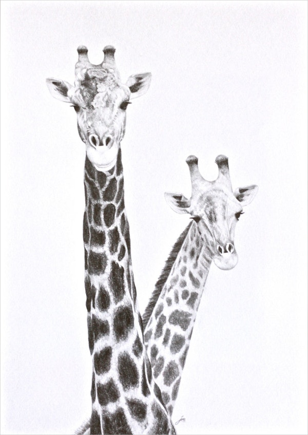 African Giraffe Drawing