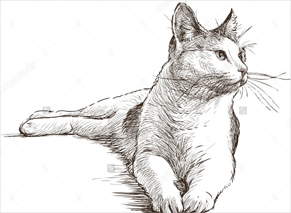 Lying Cat Drawing