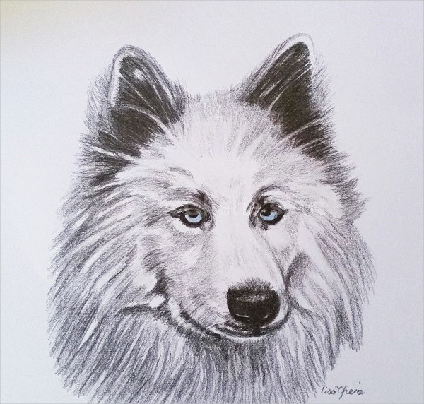 Wolf Graphite Drawing