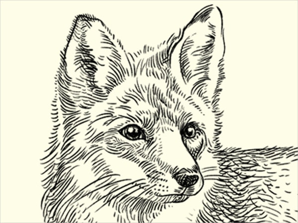 Brown Fox Drawing