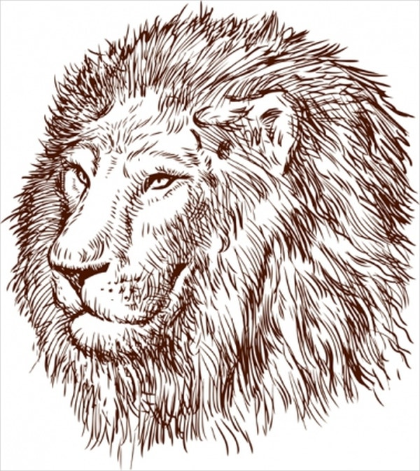 Vector Lion Drawing
