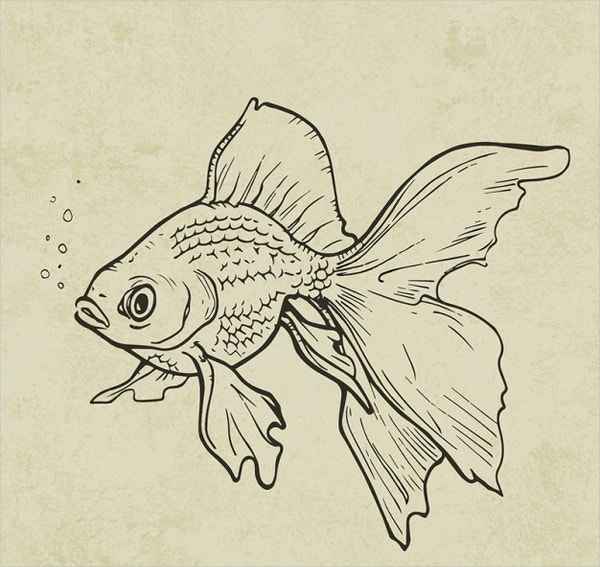 Hand drawn Fish Drawing