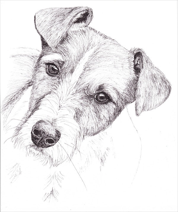 Dog Art Pen Drawing
