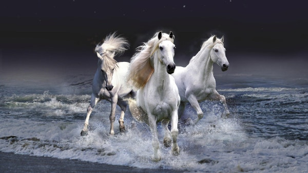 Amazing White Horse Animal Wallpaper