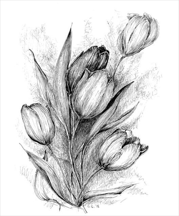 19 flower drawings free psd ai eps format download free tulip flower drawing thecheapjerseys Choice Image