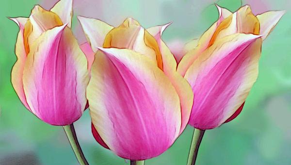 flowerdrawings