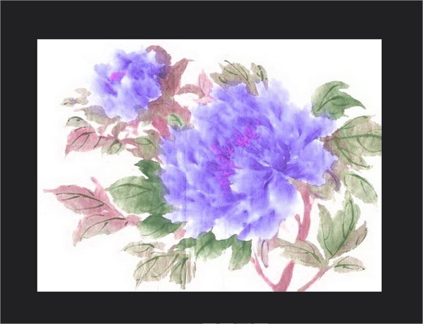Peonies Flower Drawings