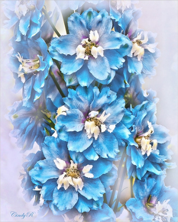 Delphinium Flower Drawing
