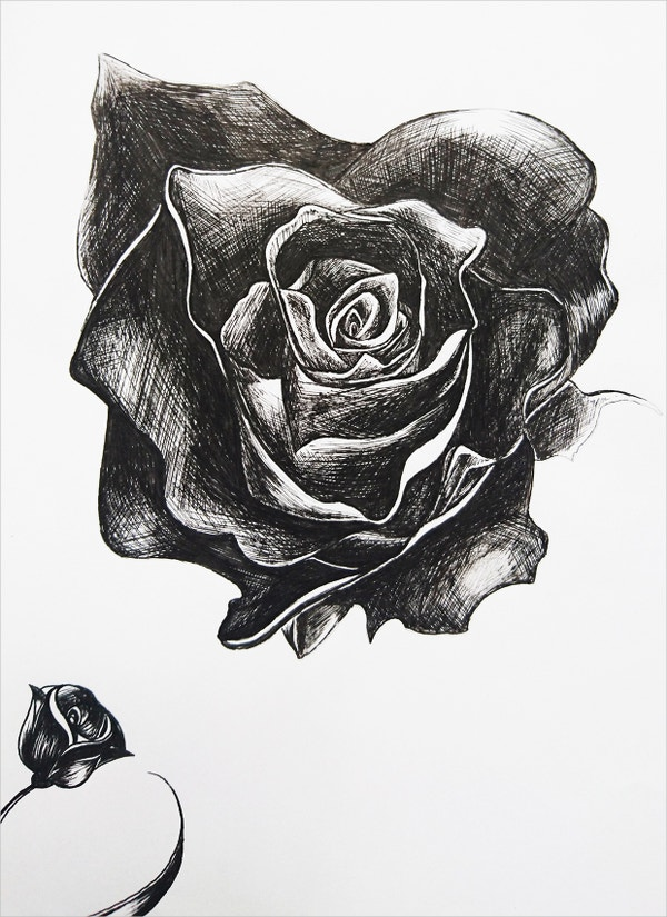 20+ Rose Drawings - Free PSD, AI, EPS Format Download ...