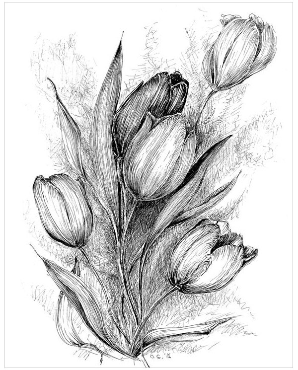 tulip-flower-drawing