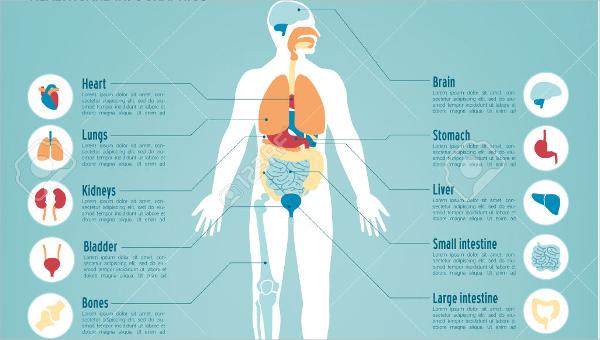 ideal body fat chart1