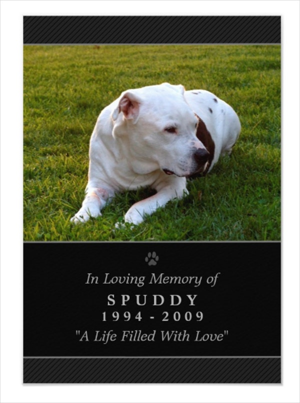 Black Modern Pet Memorial Card