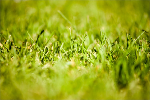 abstract grass texture template