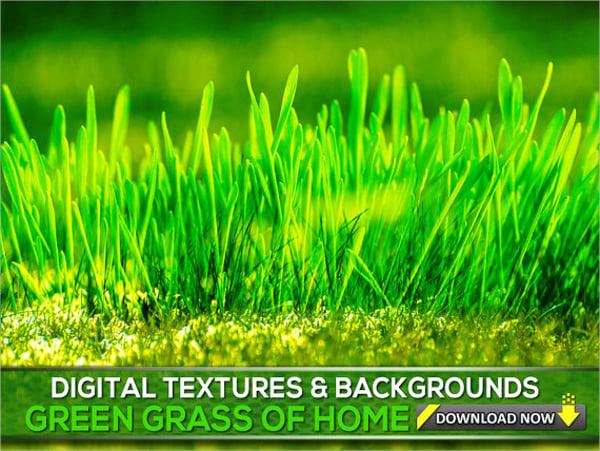 Green Grass Blade Texture