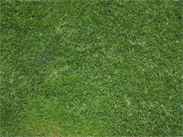 Pattern Grass Texture Template