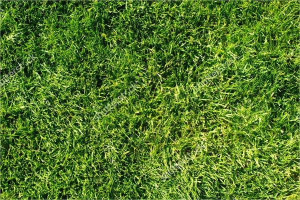 Field Of Fresh Green Grass Texture