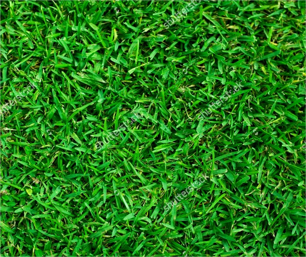 natural background green grass texture