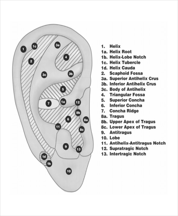 11  reflexology chart templates