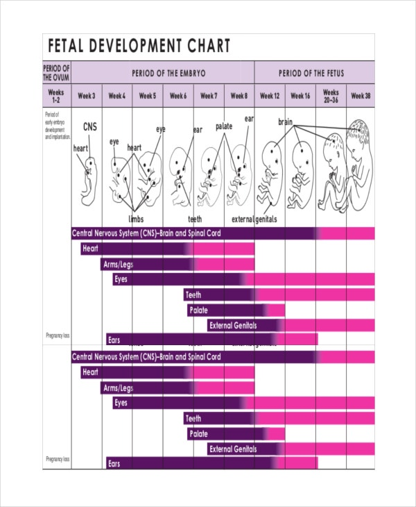 Baby Development Chart. Handy Chart For Well-Child Visits And