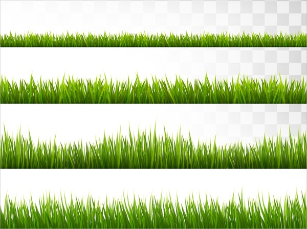 Several Grass Borders Vector
