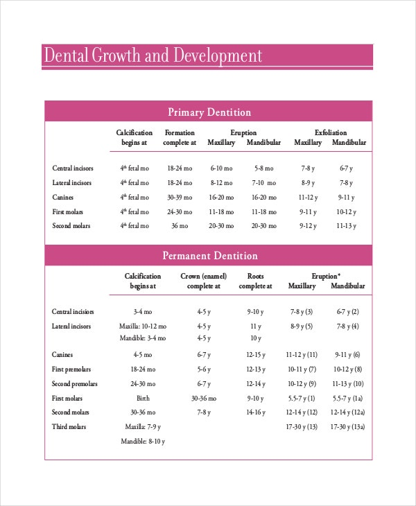 Baby Teeth Growth Chart Templates  Free Sample Example