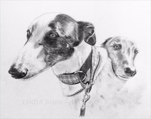 Pet Portrait Graphite Pencil Drawing