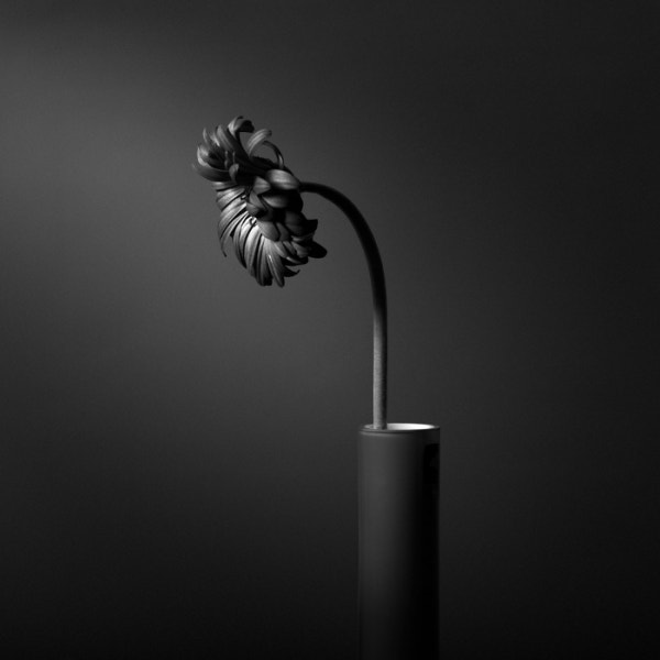 sunflowers black white photography