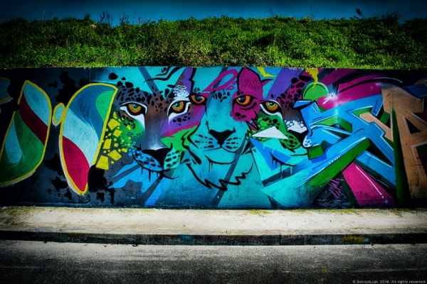 Wild Cat Graffiti Art