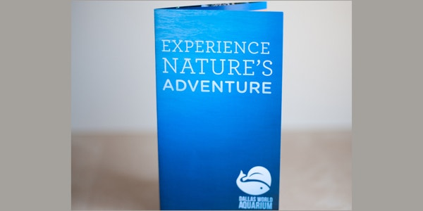 world aquarium brochure template