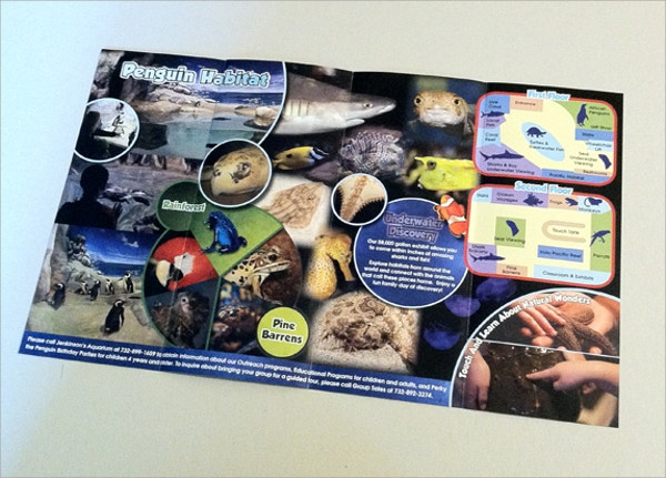 double gate fold aquarium brochure