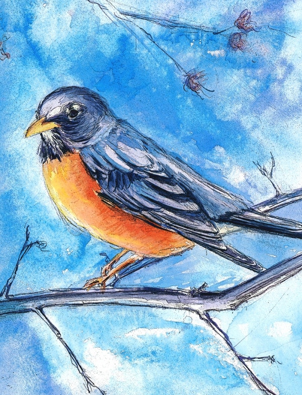 Watercolor Robin Painting