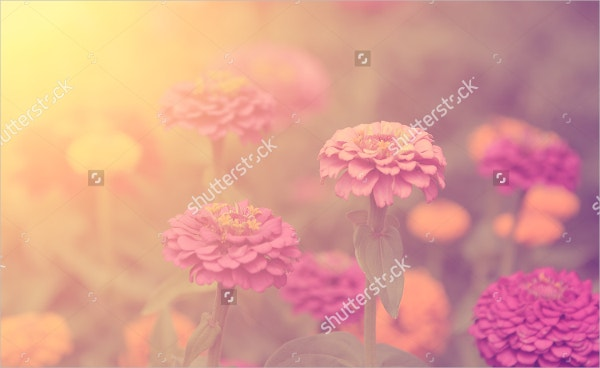 Vintage Flower Photography