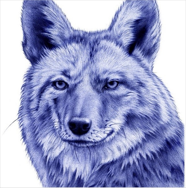fox ballpoint drawing