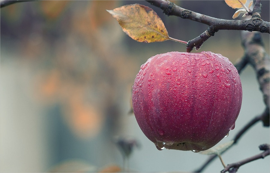 Fall Juicy Apple Photography