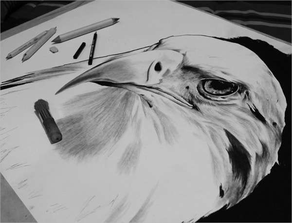 Eagle Charcoal Drawing