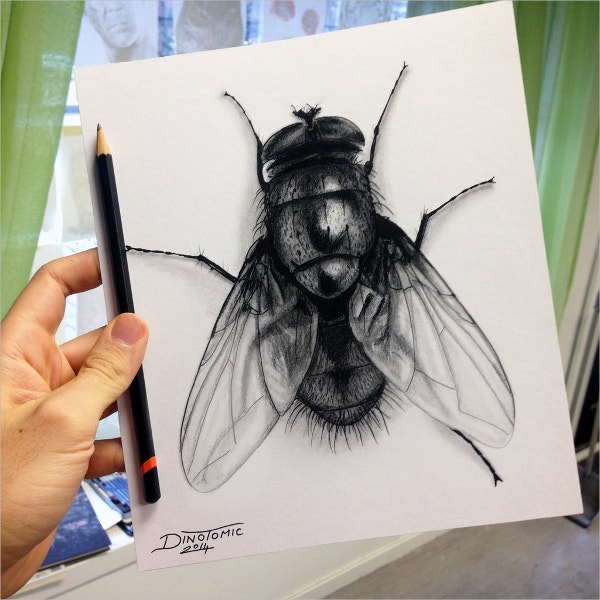 Charcoal Drawing of Fly