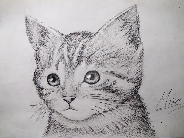 Cute Kitty Drawing