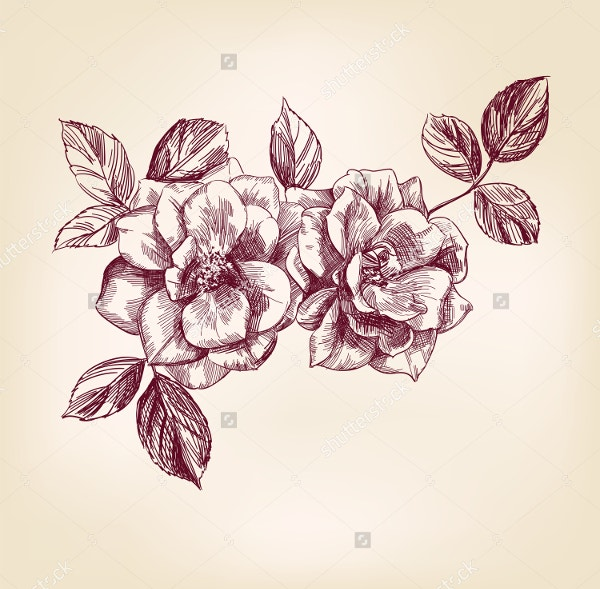 Roses Hand Drawn Vector llustration