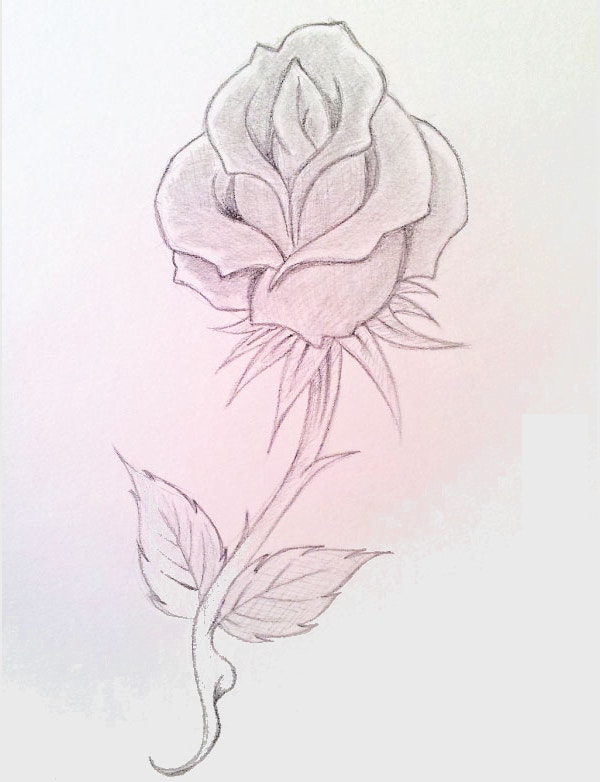 Beautiful Hand Sketch Rose Drawing