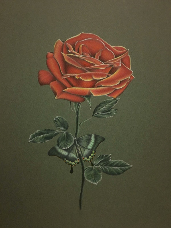 Photorealistic Red Rose Drawing