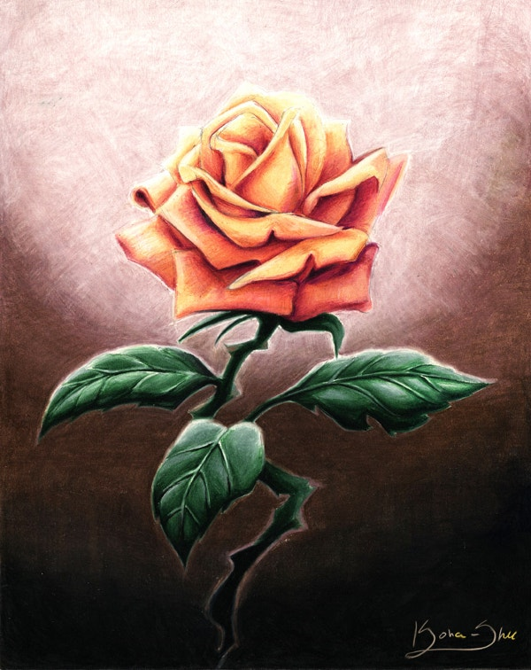 Beautiful Rose Print Drawing