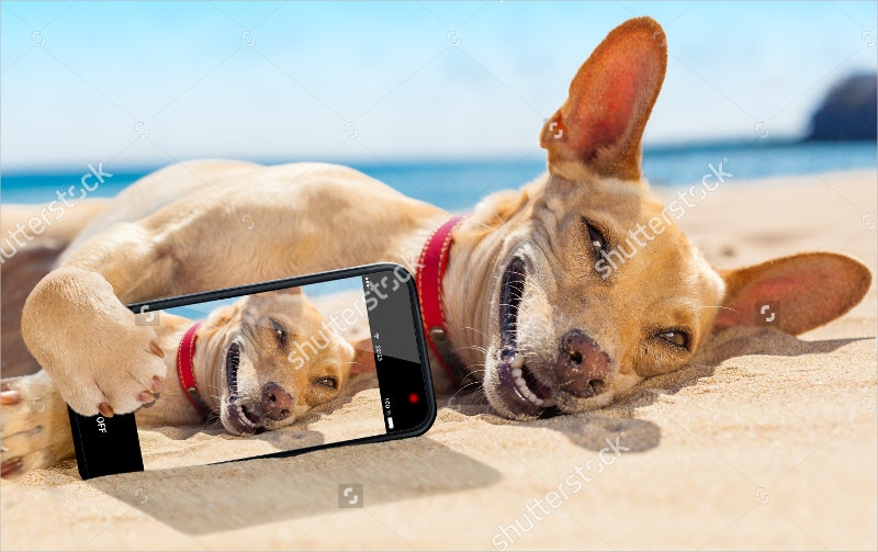 Chihuahua Dog Relaxing & Resting
