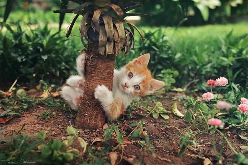 Funny Gymnastics Cat